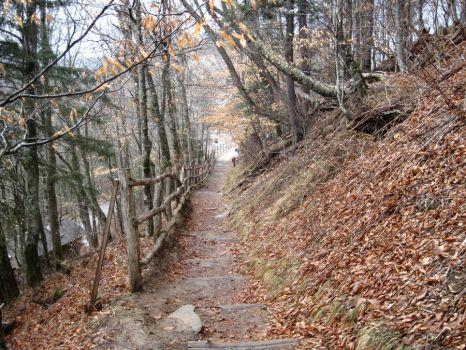 Scenes from the Appalachian Trail by marylysander