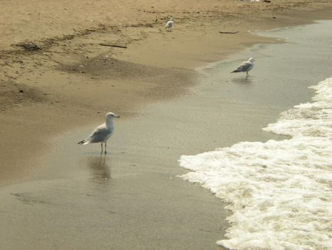 Gulls in the Sand by abcjohnson1834