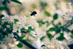 Busy Bumble by tennyomelime