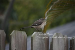On a Fence by CandiceSmithPhoto