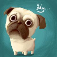 Pug of the day - why... by SEEZ85