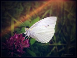 Butterfly evening.... by gintautegitte69