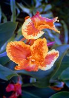 More Glads by Tailgun2009
