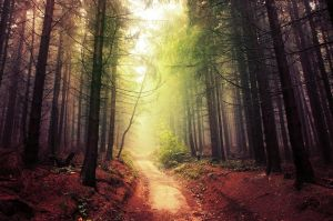 If These Trees Could Talk LXIX. by realityDream