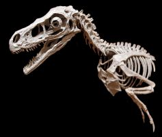 bambiraptor step 7 by hannay1982