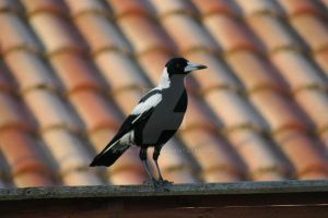 Mother Magpie by SinCityFan