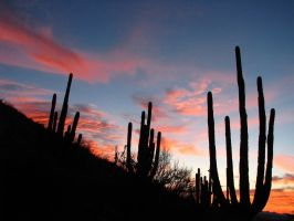 Saguaro Silhouettes by wonenownlee