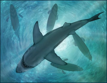 Great White by AndyFairhurst