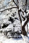 Winter's Delight by Lust0fADeeperPain