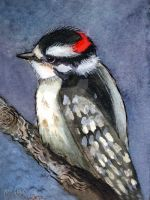 Downy Woodpecker Watercolor by BlueBirdie