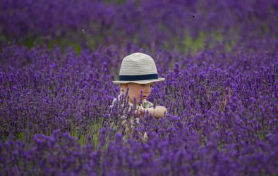 Lost in Lavender! by Mincingyoda