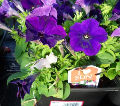 41 - Wal-Mart Gardening Section 6 by TheTravellingTricera