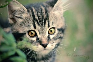My Little Tiger by Alessia-Izzo