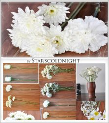 White flowers 3 stock photos by starscoldnight by StarsColdNight