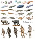 Evolution project by NTamura
