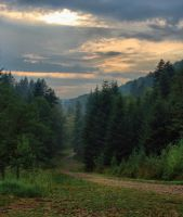 A forest road by starykocur