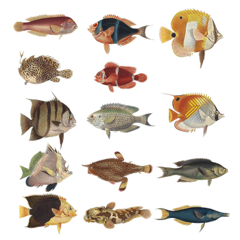 Variety Of Fishes 2 PNG by chaseandlinda