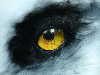 pale quad wolf eye by LilleahWest