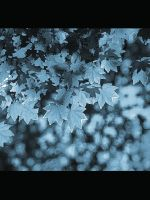 winter leaves by bigbadnosh