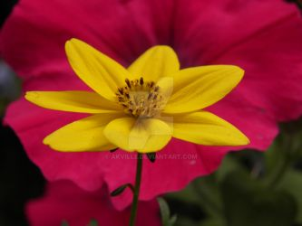 yellow flower by akville