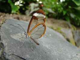 butterfly mr. invisible by babsartcreations