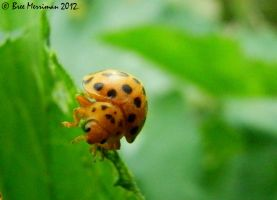 28 Spot Bug by BreeSpawn