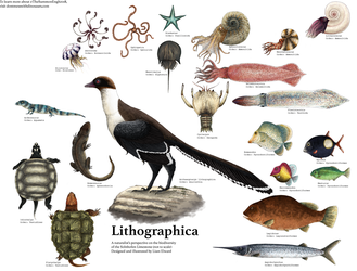 Lithographica by PrehistoryByLiam