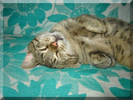 Sleeping kitty by Silliness