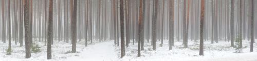 winter barcode 2 by Henrikson