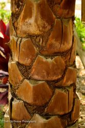 palm bark by dreamsborninfire