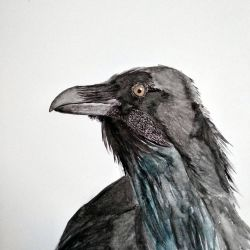 Raven watercolor by Mextrep