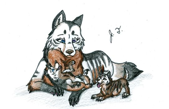 Canine Pictures - Natsume, Silas, And Yvaine by joshbluemacaw