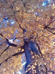 Deciduous 2012 by serenawaters