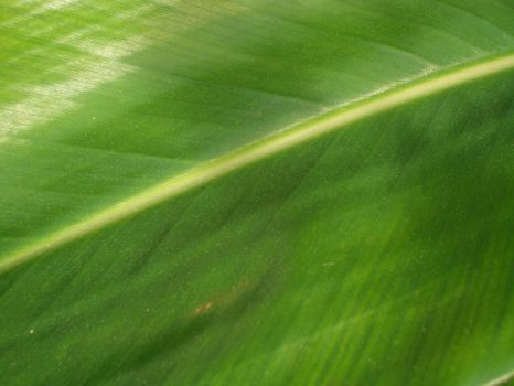 angle leaf by TextureTheif