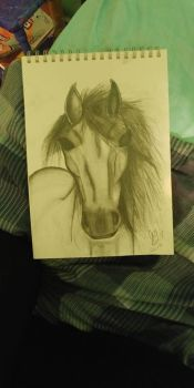 Quick Horse Sketch by Cheeseburger911
