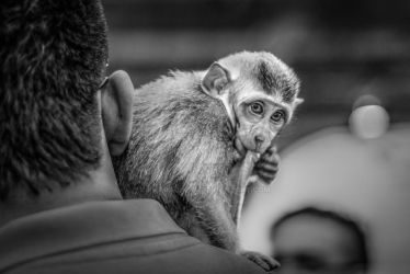 Monkey Business by pharaohz74