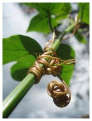 Nature's Knots by narlified