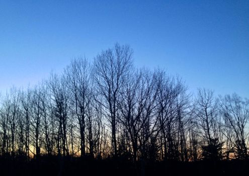 Naked nighttime trees by Ripplin