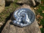 Scalemail Snake - Curled Up on a Warm Rock
