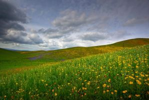 First Wildflowers 2010 VI by ernieleo