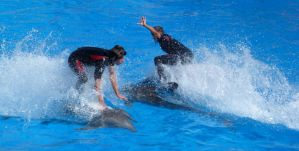 Surf at Marineland by sword-phrn