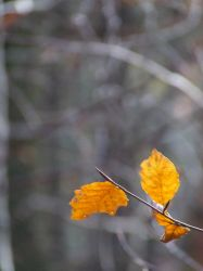 The last leaves by Tricia-Danby