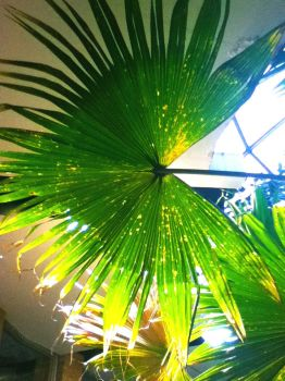 Indoor Rainforest by MissInglis