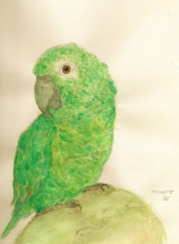Green parrot by alvringer