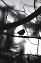 Small Bird In The Dark by petitpepindepomme