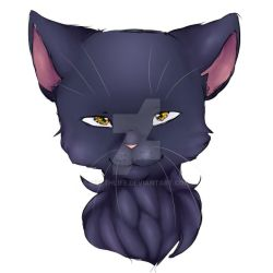 SLaTe CoLOUreD CAt by My8thLife