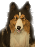 a other dog drawing by SolarXolverite