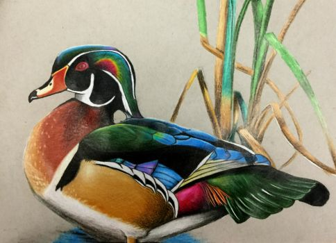 Wood Duck by AlphaWolf209x