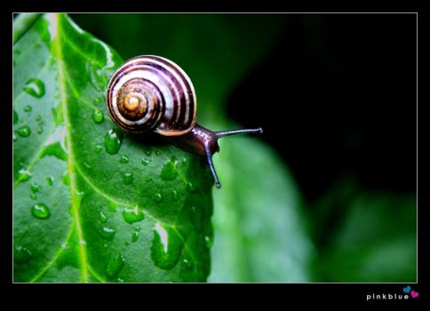 raindrops and the snail by pinkblue