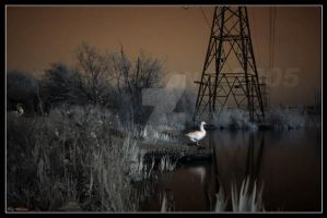 Fairburn Ings Take Two by crazy1ady